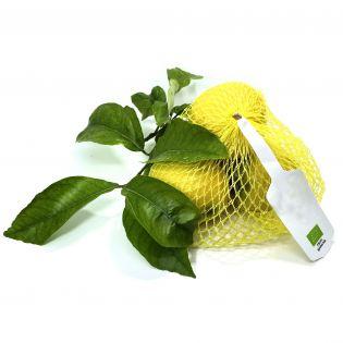 Organic Sicilian Verdelli lemons - 0.5 kg pack