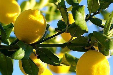 online sale of Sicilian oranges and lemons